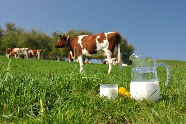 milky.jpg.pagespeed.ce.oLs1Wj5Kvm