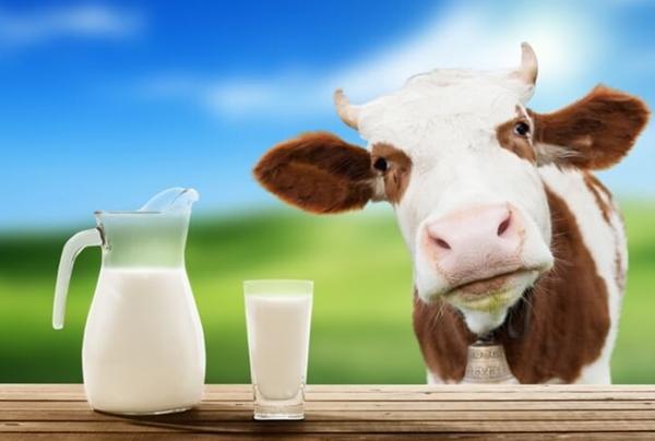 Як переврити чи натуральне молоко
