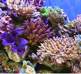 коралловый кальций