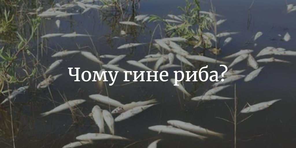 чому гине риба в ставках